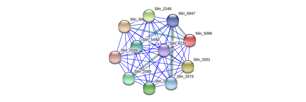 Slin_5096 protein (Spirosoma linguale) - STRING interaction network