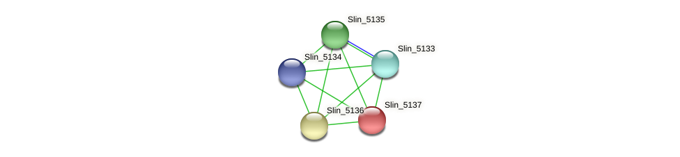 Slin_5137 protein (Spirosoma linguale) - STRING interaction network