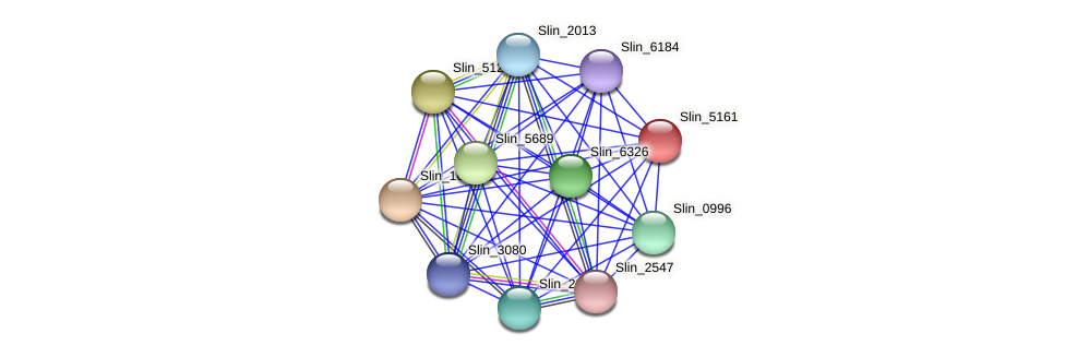 Slin_5161 protein (Spirosoma linguale) - STRING interaction network