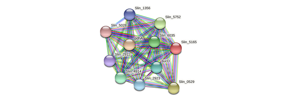 Slin_5165 protein (Spirosoma linguale) - STRING interaction network