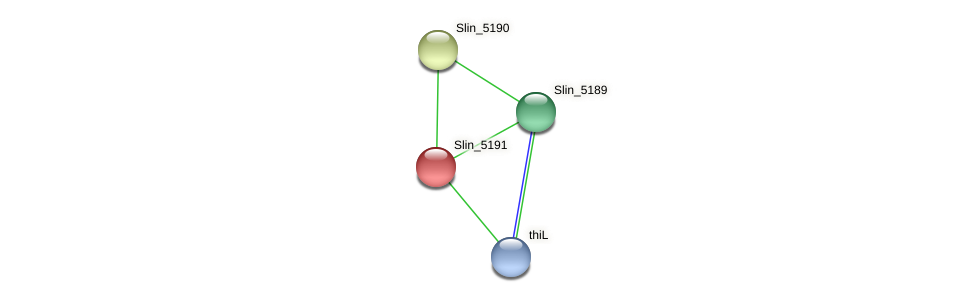 Slin_5191 protein (Spirosoma linguale) - STRING interaction network