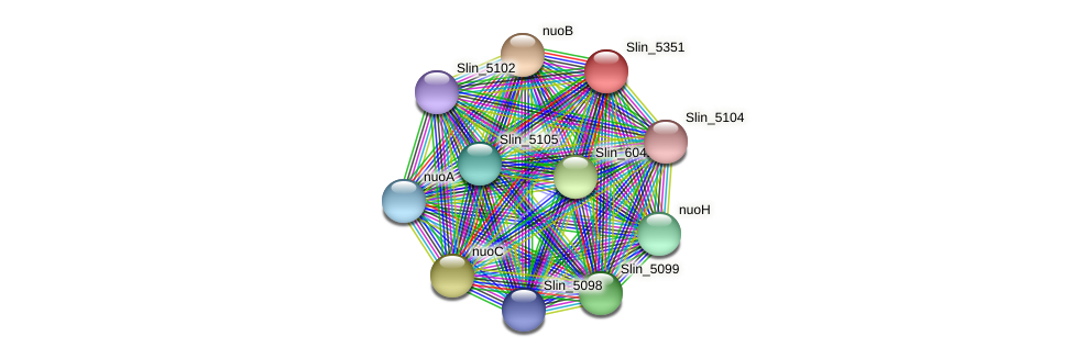 Slin_5351 protein (Spirosoma linguale) - STRING interaction network