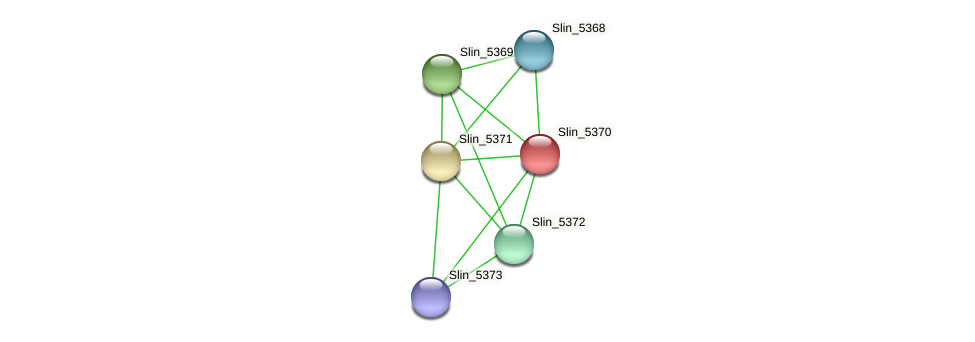 Slin_5370 protein (Spirosoma linguale) - STRING interaction network