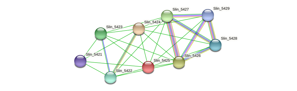 Slin_5425 protein (Spirosoma linguale) - STRING interaction network