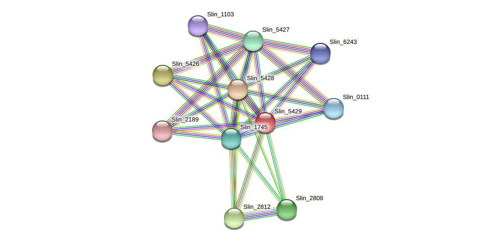 Slin_5429 protein (Spirosoma linguale) - STRING interaction network