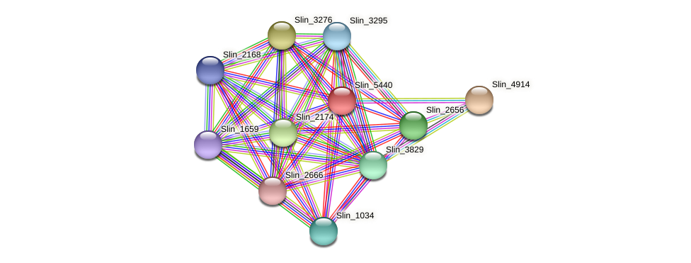 Slin_5440 protein (Spirosoma linguale) - STRING interaction network