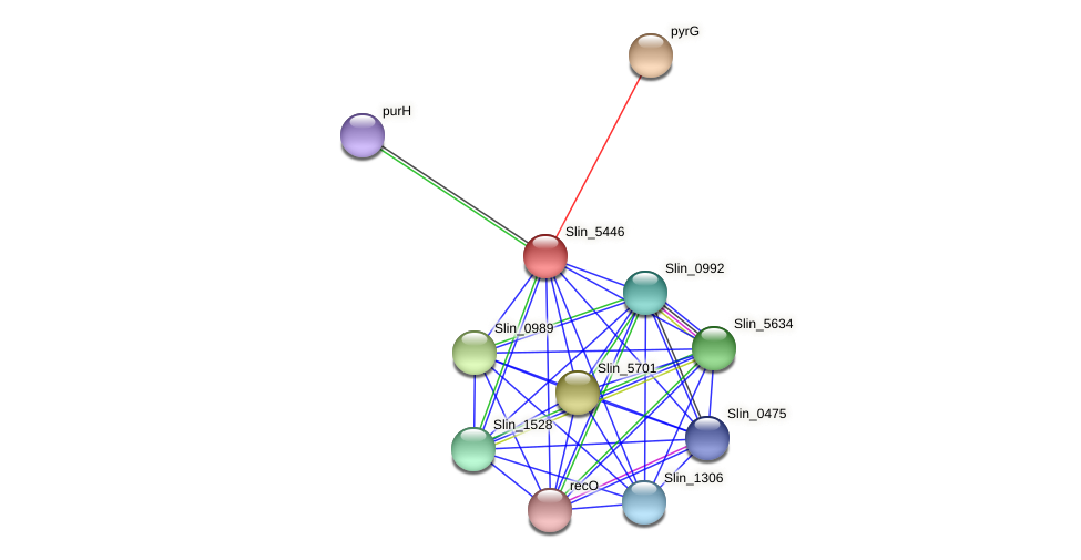 Slin_5446 protein (Spirosoma linguale) - STRING interaction network