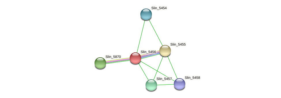 Slin_5456 protein (Spirosoma linguale) - STRING interaction network