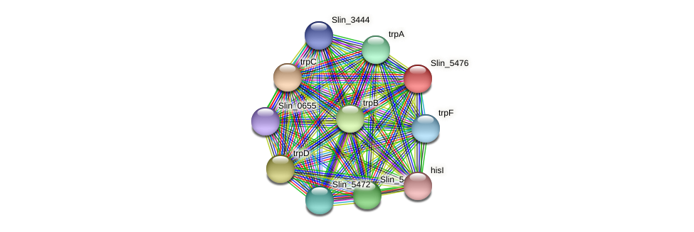 Slin_5476 protein (Spirosoma linguale) - STRING interaction network