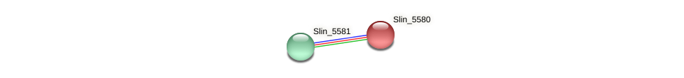 Slin_5580 protein (Spirosoma linguale) - STRING interaction network