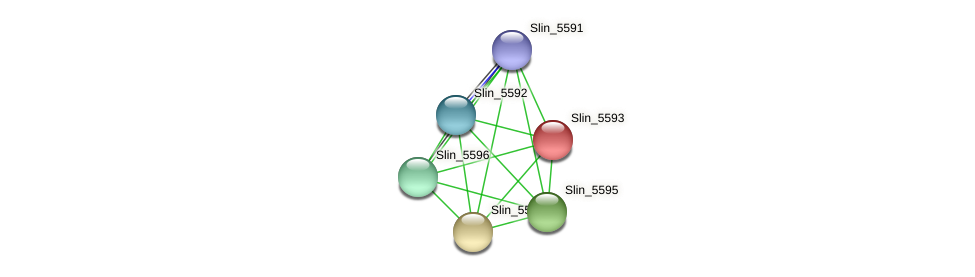Slin_5593 protein (Spirosoma linguale) - STRING interaction network