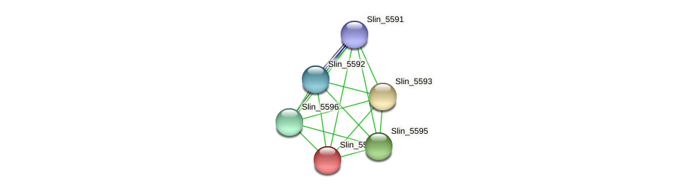 Slin_5594 protein (Spirosoma linguale) - STRING interaction network