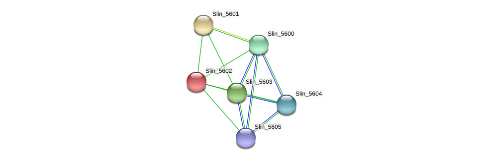 Slin_5602 protein (Spirosoma linguale) - STRING interaction network
