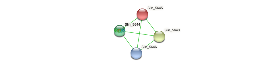 Slin_5645 protein (Spirosoma linguale) - STRING interaction network