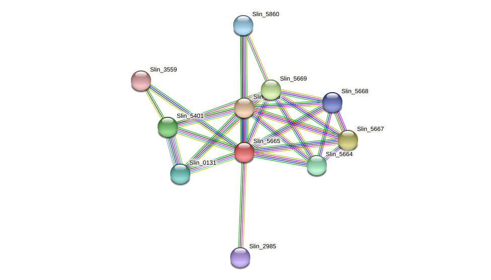 Slin_5665 protein (Spirosoma linguale) - STRING interaction network