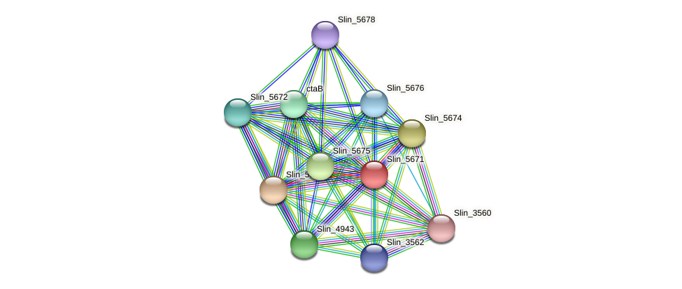 Slin_5671 protein (Spirosoma linguale) - STRING interaction network