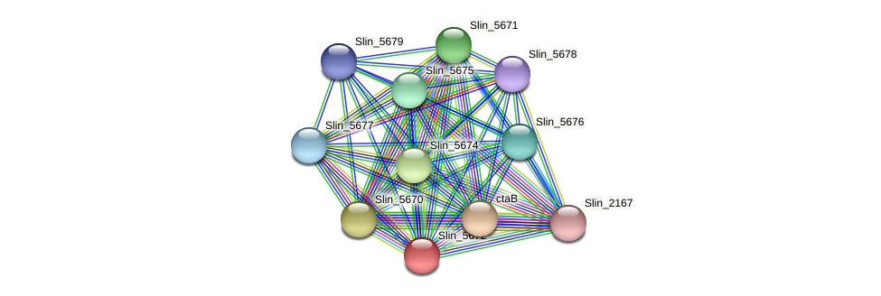Slin_5672 protein (Spirosoma linguale) - STRING interaction network