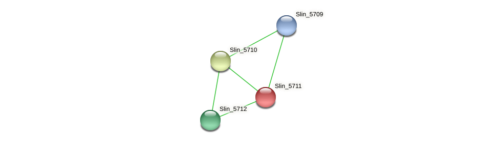 Slin_5711 protein (Spirosoma linguale) - STRING interaction network