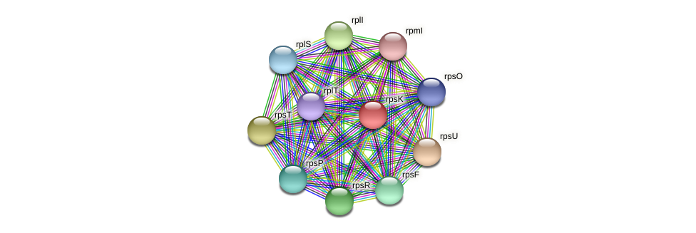 rpsK protein (Spirosoma linguale) - STRING interaction network