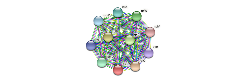 Slin_5766 protein (Spirosoma linguale) - STRING interaction network