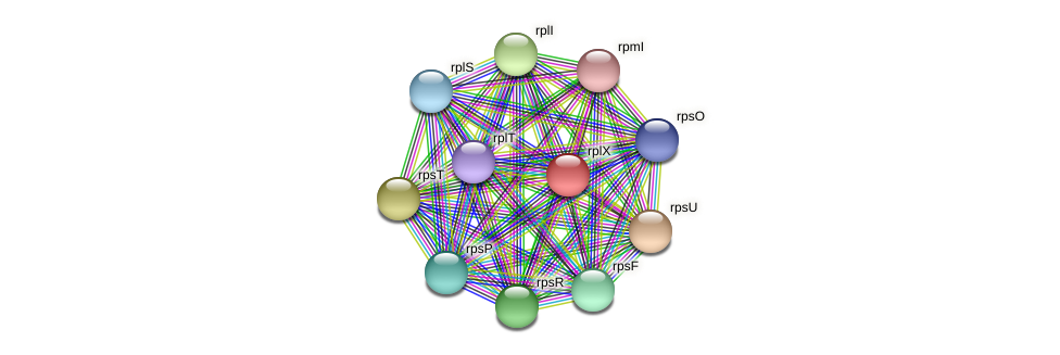 rplX protein (Spirosoma linguale) - STRING interaction network
