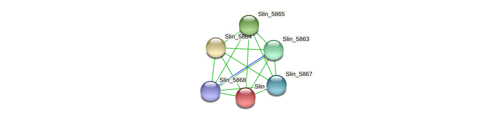 Slin_5866 protein (Spirosoma linguale) - STRING interaction network