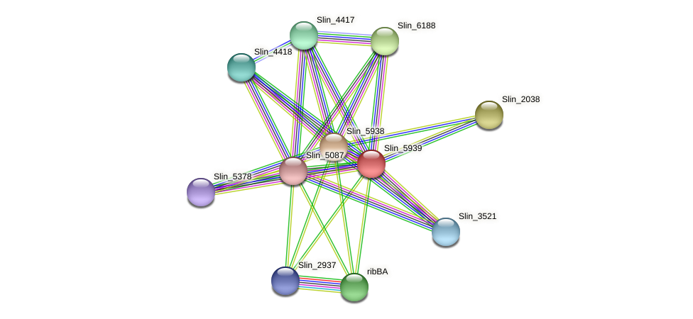 Slin_5939 protein (Spirosoma linguale) - STRING interaction network
