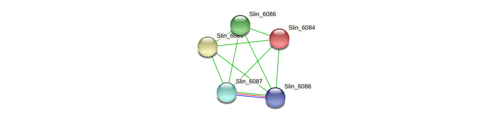 Slin_6084 protein (Spirosoma linguale) - STRING interaction network