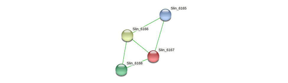Slin_6167 protein (Spirosoma linguale) - STRING interaction network
