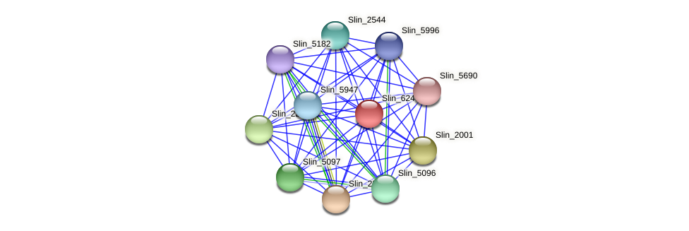 Slin_6247 protein (Spirosoma linguale) - STRING interaction network