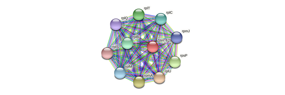 Slin_6283 protein (Spirosoma linguale) - STRING interaction network