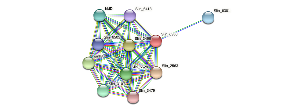 Slin_6380 protein (Spirosoma linguale) - STRING interaction network