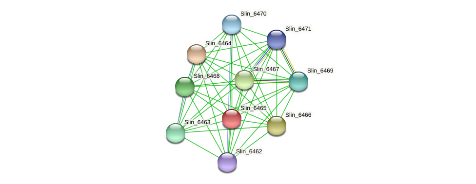 Slin_6465 protein (Spirosoma linguale) - STRING interaction network