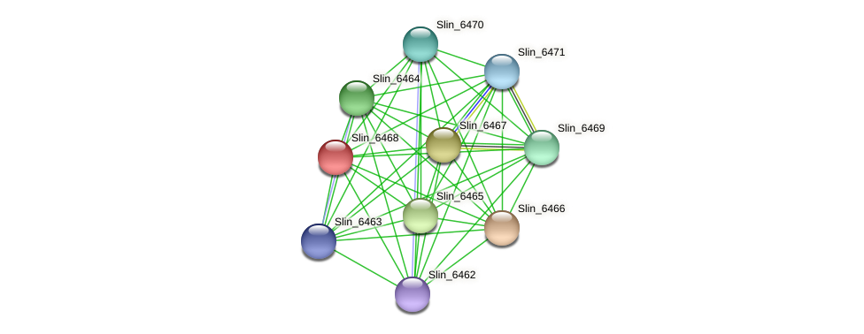 Slin_6468 protein (Spirosoma linguale) - STRING interaction network