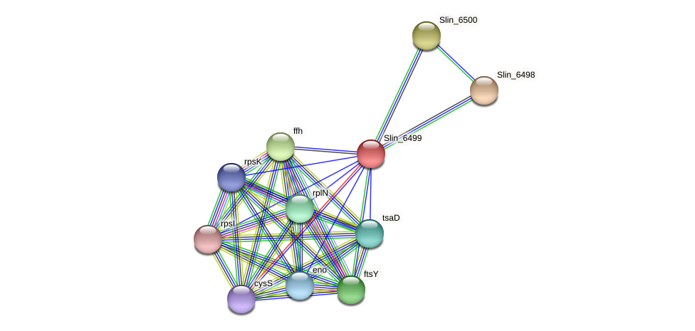 Slin_6499 protein (Spirosoma linguale) - STRING interaction network