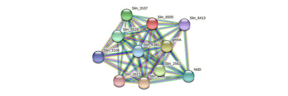 Slin_6505 protein (Spirosoma linguale) - STRING interaction network