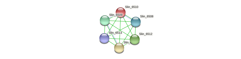 Slin_6510 protein (Spirosoma linguale) - STRING interaction network