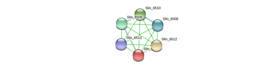 Slin_6511 protein (Spirosoma linguale) - STRING interaction network