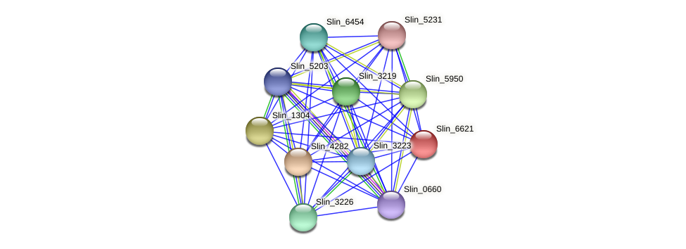 Slin_6621 protein (Spirosoma linguale) - STRING interaction network