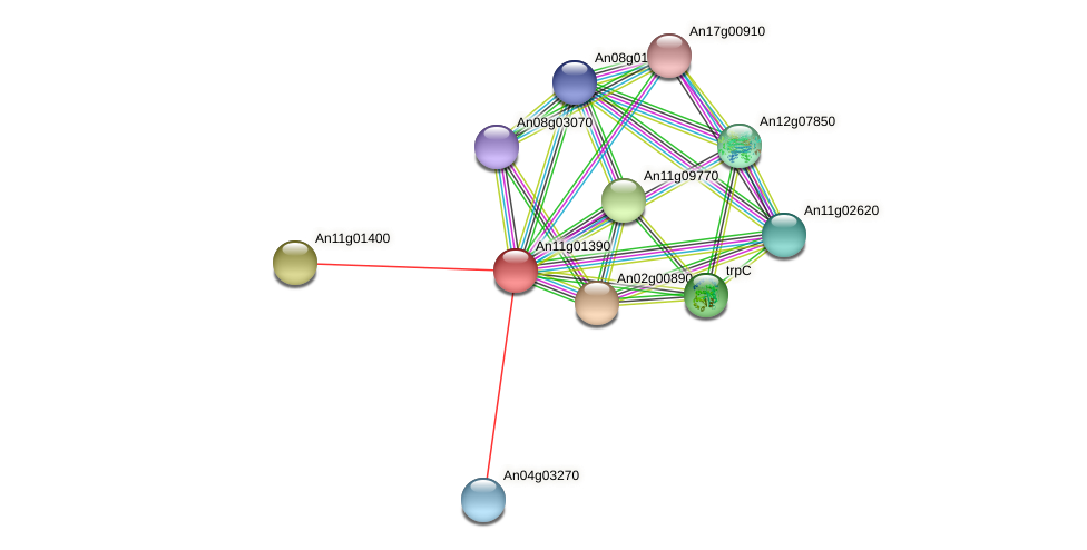 An11g01390 protein (Aspergillus niger) - STRING interaction network