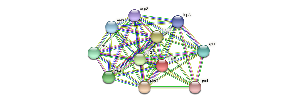 pheS protein (Alcaligenes faecalis) - STRING interaction network