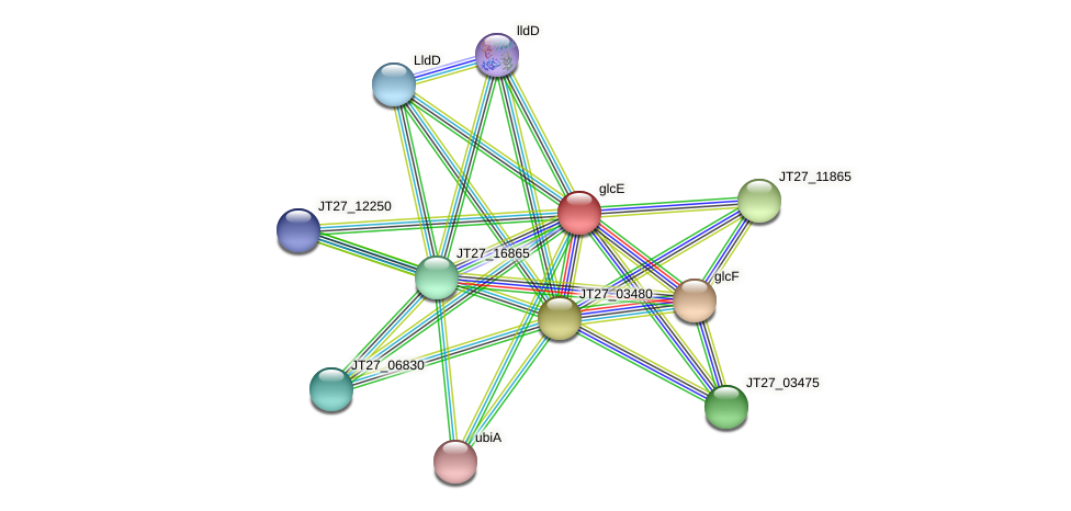 glcE protein (Alcaligenes faecalis) - STRING interaction network