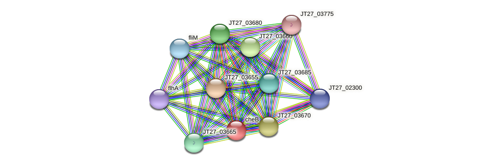 cheB protein (Alcaligenes faecalis) - STRING interaction network