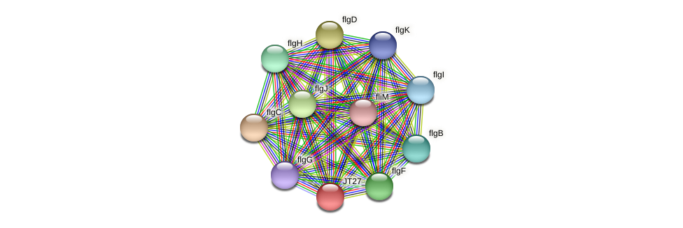 JT27_03735 protein (Alcaligenes faecalis) - STRING interaction network