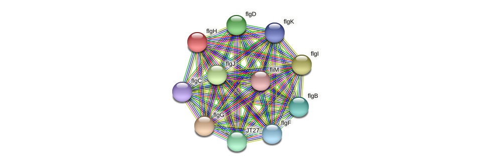 flgH protein (Alcaligenes faecalis) - STRING interaction network