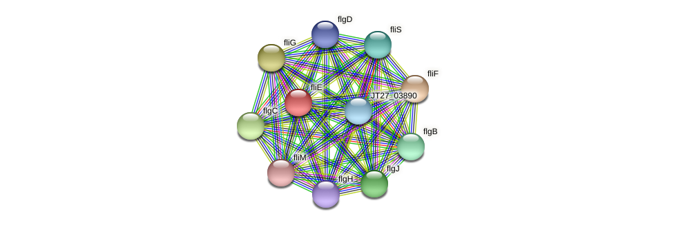 fliE protein (Alcaligenes faecalis) - STRING interaction network