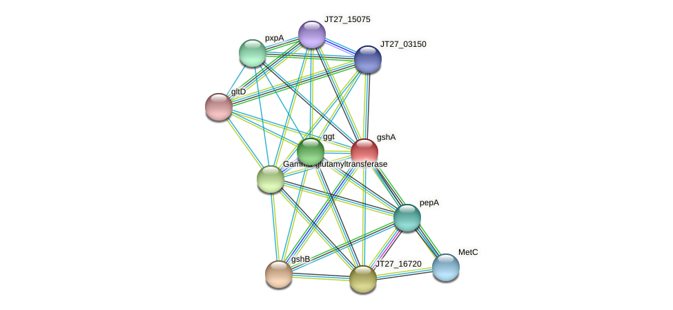 gshA protein (Alcaligenes faecalis) - STRING interaction network