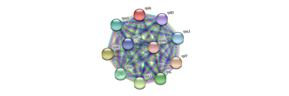 rplA protein (Alcaligenes faecalis) - STRING interaction network