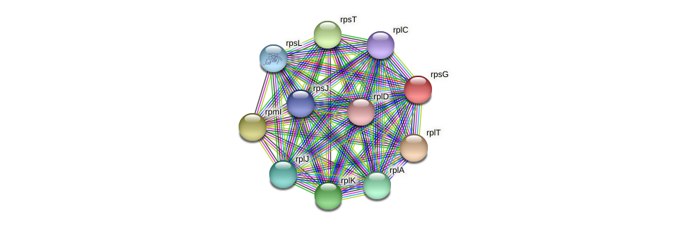 rpsG protein (Alcaligenes faecalis) - STRING interaction network