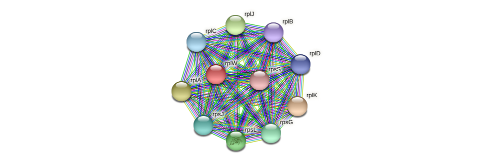 rplW protein (Alcaligenes faecalis) - STRING interaction network